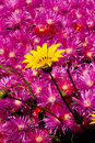 Free Flowers Royalty Free Stock Image - 2807446