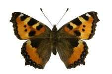 Aglais Urticae (butterfly) Stock Photography