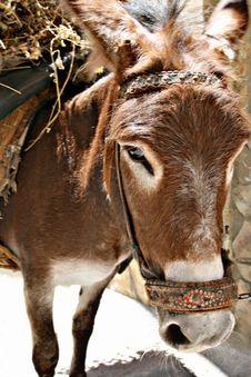 Free Donkey Stock Photos - 2802073