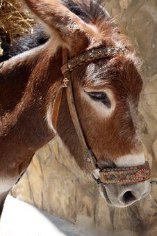 Free Donkey Stock Images - 2802084