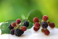 Free Wild Blackberries Stock Photos - 2802193