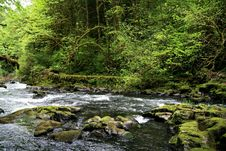 Free Cascade Stream Stock Photo - 2806640