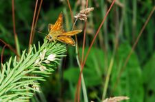 Free Small Butterfly Stock Image - 2806791