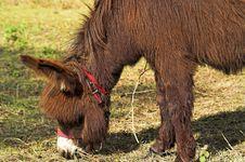 Free Donkey Royalty Free Stock Image - 2808196