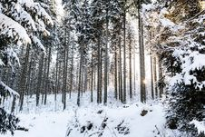 Free Winter Sunrise In Mountain Forest Royalty Free Stock Images - 28006119