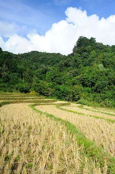 Free Rice Terrce Stock Photo - 28012220