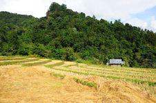 Free Rice Terrace Stock Image - 28012351