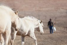 Free Horses Going To Eat Stock Images - 28013084