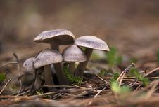 Free Mushroom Family Royalty Free Stock Images - 28015669