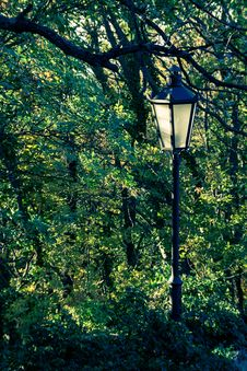 Free Autumn Lamp Post Royalty Free Stock Photo - 28018525