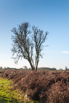Bare Solitairy Tree In A Nature Reserve Stock Photography