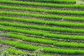 Free Terraced Rice Fields In Northern Thailand Stock Photo - 28021760