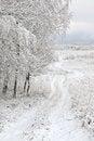 Free Winter Road Royalty Free Stock Image - 28023196
