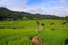 Free Terraced Rice Fields In Northern Thailand Stock Images - 28021464