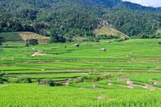 Free Terraced Rice Fields In Northern Thailand Stock Image - 28021501