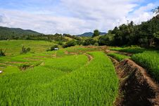 Free Terraced Rice Fields In Northern Thailand Royalty Free Stock Image - 28021536