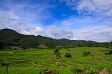 Free Terraced Rice Fields In Northern Thailand Royalty Free Stock Image - 28021576