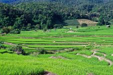 Free Terraced Rice Fields In Northern Thailand Royalty Free Stock Photo - 28021595