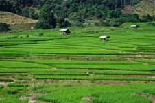 Free Terraced Rice Fields In Northern Thailand Stock Photography - 28021632