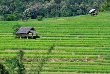 Free Terraced Rice Fields In Northern Thailand Royalty Free Stock Image - 28021696
