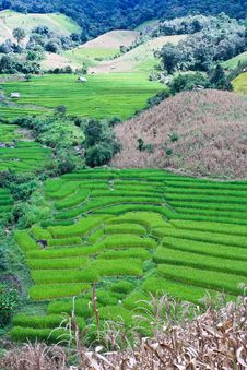 Free Terraced Rice Fields In Northern Thailand Stock Photo - 28021850