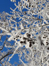 Free Snowy Branches Blue Sky Background Royalty Free Stock Photo - 28032355