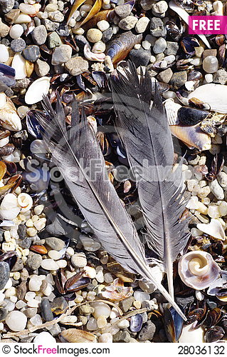 Free Feathers Of A Bird Stock Photography - 28036132