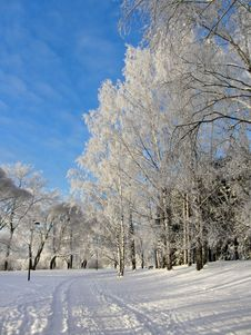 Free Snowy Park Frozen Trees Background Royalty Free Stock Photos - 28032398