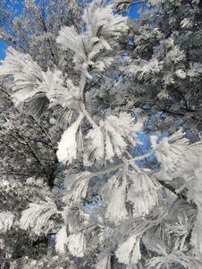 Frozen Winter Branches