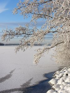 Free Snowy Tree Near Frozen Lake Royalty Free Stock Photo - 28034215
