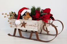 Santa Piggy Stock Photography
