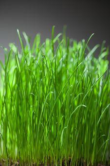 Free Fresh Grass Dense Bunch Stock Photos - 28039983