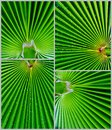 Free Palm Leaf Texture Royalty Free Stock Image - 28046236