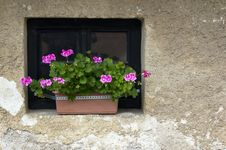 Free Flower Pot Royalty Free Stock Photography - 28041167