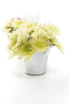 Free Tin Buckets With Yellow Chrysanthemum Stock Photo - 28042390