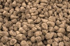 Free Sugar Beets Stock Photography - 28043412