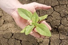 Free Save Plant Stock Photography - 28044702
