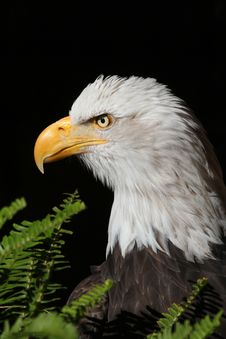 Free Eagle Stock Image - 28044741