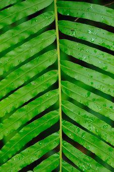 Free Green Leaf Royalty Free Stock Photos - 28046548