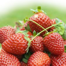 Strawberries Close-up Royalty Free Stock Photos