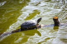 Free Turtle Stock Photos - 28050453