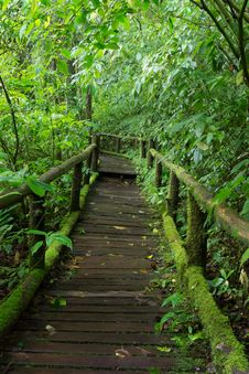Free Classic Wooden Walkway In Rain Forest Royalty Free Stock Photography - 28052537