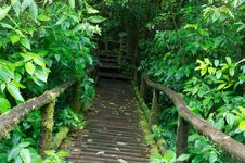 Free Classic Wooden Bridge In Rain Forest Royalty Free Stock Images - 28052619