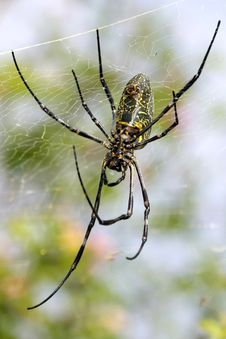 Free Spider Royalty Free Stock Image - 28059146