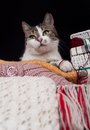 Free A Cat Between The Balls Royalty Free Stock Image - 28060886