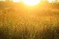 Free Golden Light Shining Down On The Grass./Golden Light Stock Photos - 28062803