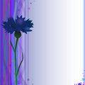 Free Cornflower Stock Photography - 28067622