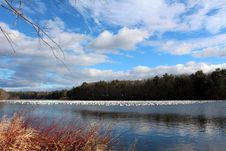 Free Snow Geese On Calm Water Stock Photography - 28060122