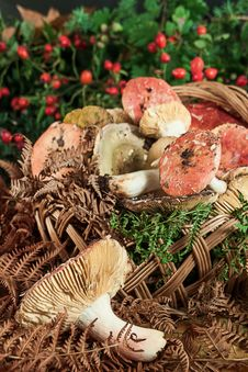 Free Basket With Mushrooms Royalty Free Stock Images - 28060879