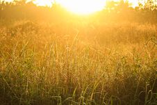 Free Golden Light Shining Down On The Grass./Golden Light Stock Photos - 28062803